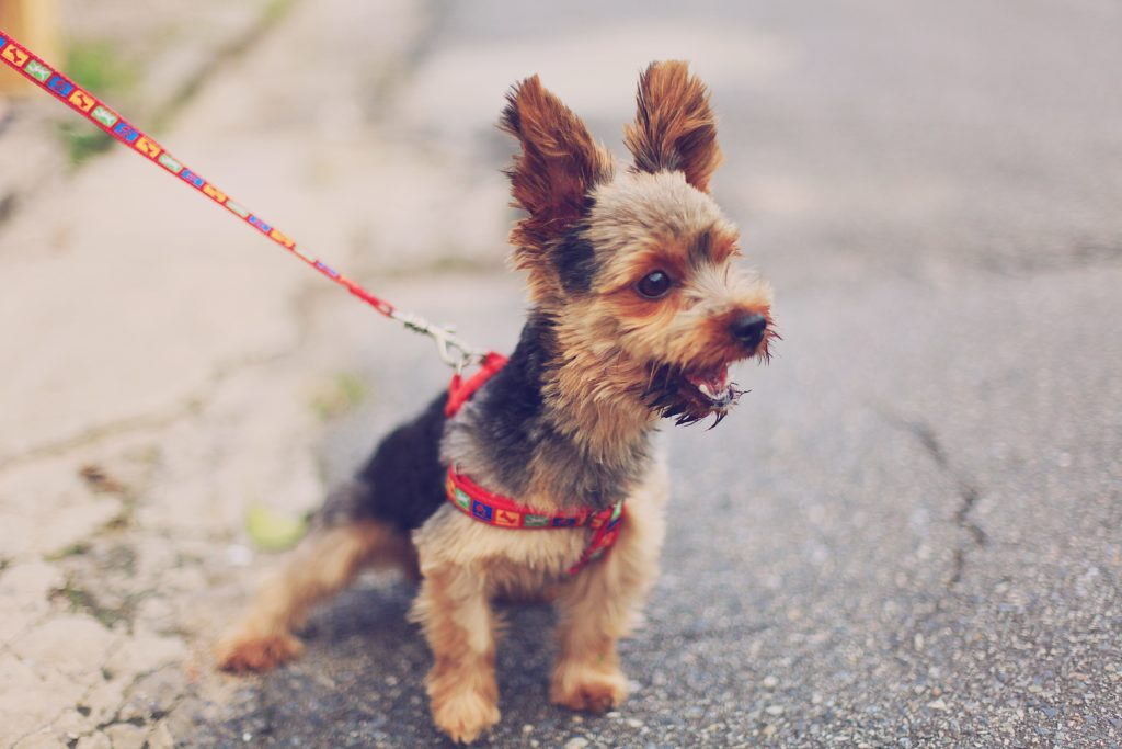what to do when your dog pulls on a leash