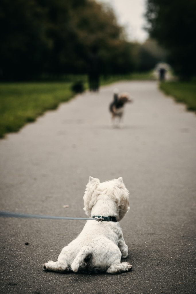 Dog staring at another dog on a walk does not want to go on